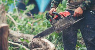 Comment abattre un arbre : étapes simples pour réussir l'abattage